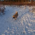 En tur i hundeskov