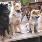 Arikarion og Familie
