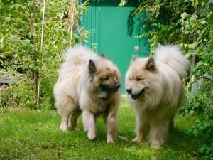 Baluba & Ron1